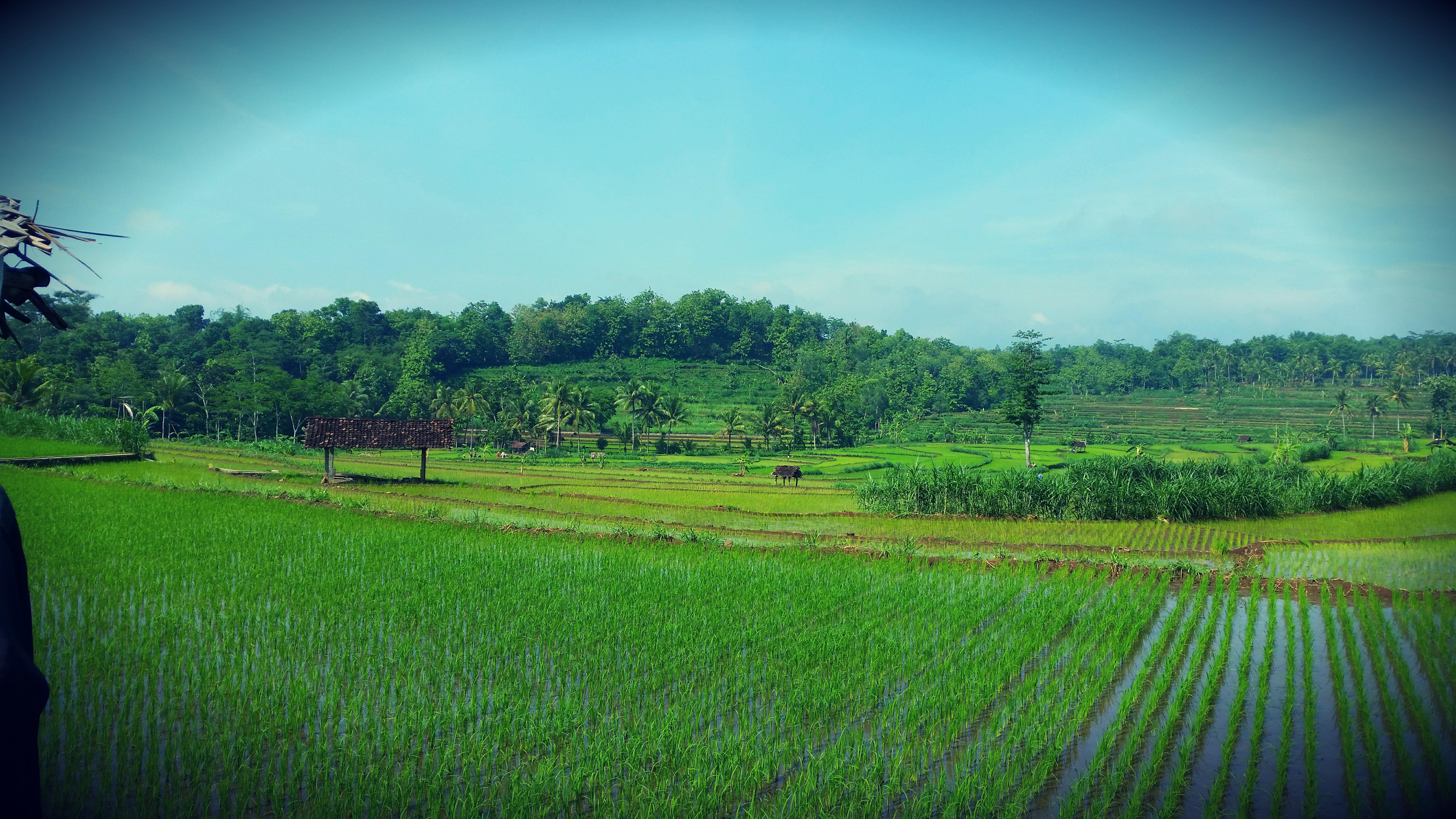 Reisverslag Indo Garden: Heerlijke dagen op Java