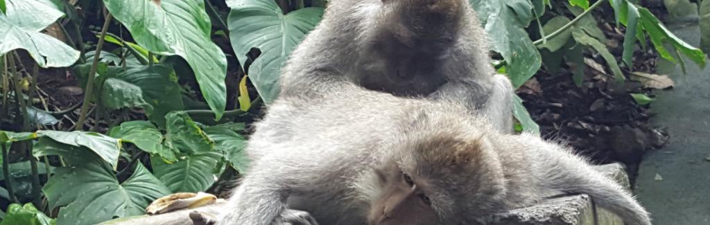 monkeysubud
