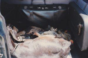 Geiten en kippen in de auto